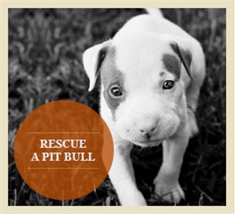 pitbull puppy rescue best food best kibble quality food reviews pitbulls