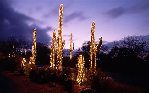 saguaro cacti decorated with christmas lights sonoran