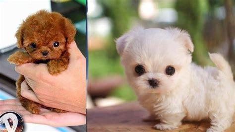 imagenes animales mas tiernos los perritos mas tiernos y peque 209 os del mundo youtube