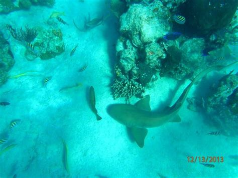 freedom boat club ta reviews snorkeling at exumas land and sea park picture of