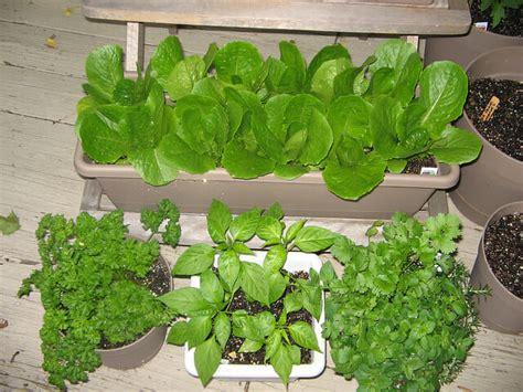 Diy Windowsill Herb Garden Getting A Small Kitchen Garden Started The Micro Gardener