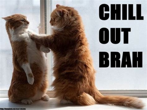 Chill Out Bro Meme - chill out brah