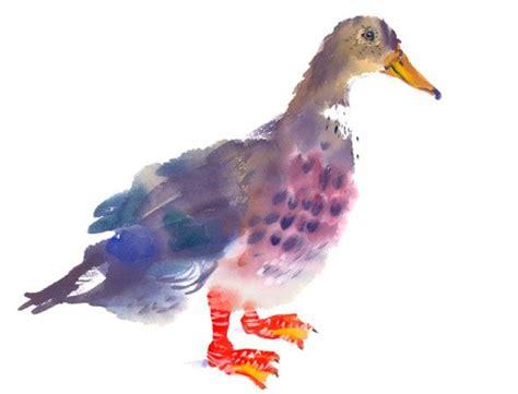 mary woodin england illustrator mallard ducks 16 best images about mary woodin on pinterest