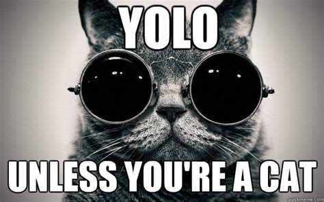 Morpheus Cat Meme - yolo unless you re a cat morpheus cat facts quickmeme
