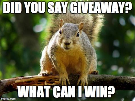 image tagged in squirrel imgflip - Giveaway Meme