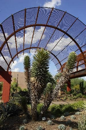 Botanical Gardens Cost Desert Botanical Garden Az Top Tips Before You