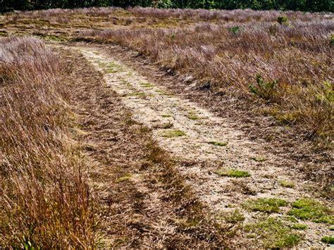 Chappaquiddick Walking Trails Land Bank Path Maintenance Status Quo Not New Strategy