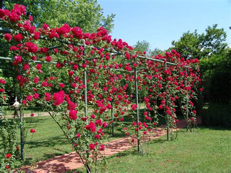 ideas for climbing rose supports 27 garden trellis and lattice ideas wood metal