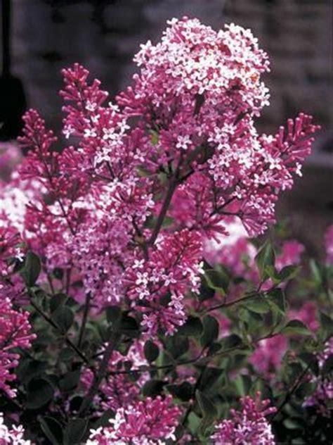 fragrant gardens landscape ontariocom green  life