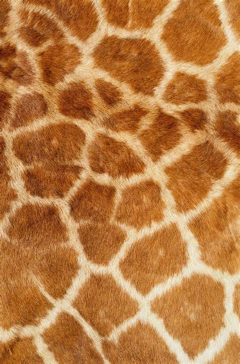 giraffe pattern iphone wallpaper skin giraffe texture fur fur texture background