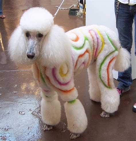 1000 images about doggy doos on pinterest poodles shih 1000 ideas about poodle cuts on pinterest standard