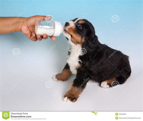 puppy milk puppy royalty free stock photo image 32549455