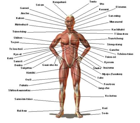 diagram of pressure points on the human pressure points martial arts do