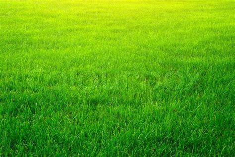 wallpaper of green grass green grass background stock photo colourbox