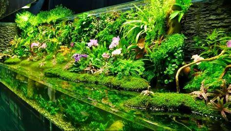 model unik aquascape sebagai hiasan rumah minimalis