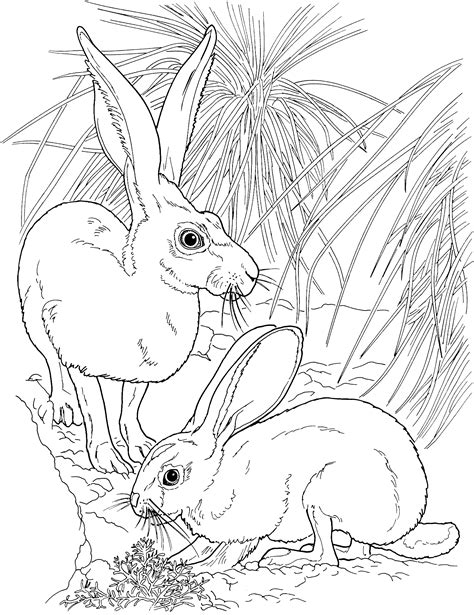 coloring pages jack rabbit jack rabbit coloring pages