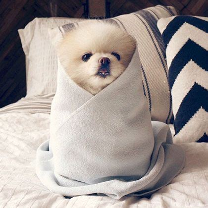 puppy burrito the world s catalog of ideas