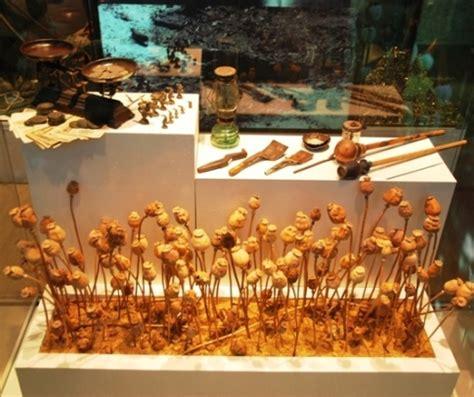 Poppy Seed Tea Detox Site Drugs Forum by Image Gallery Opium Poppy Tea