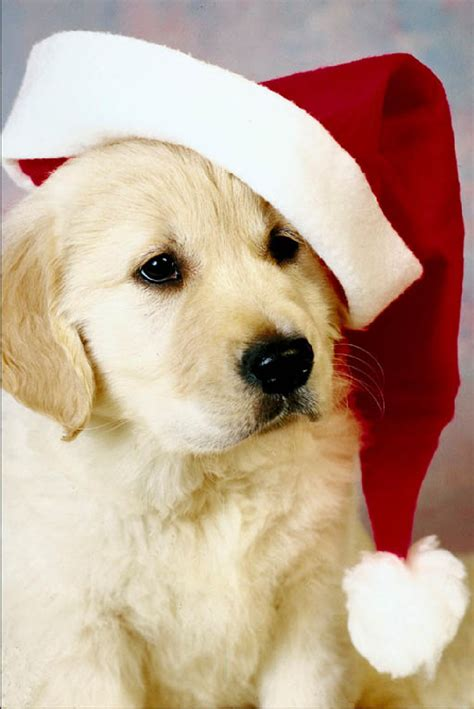 mindless mirth christmas puppies