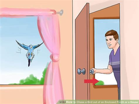 bird flying into house how to chase a bird out of an enclosed porch or a house 12 steps