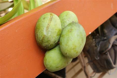 Mango Kuini bin gregory productions buah macang buah kuini