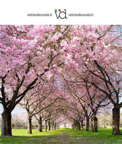 alberi fioriti fondale con immagine di un viale con alberi fioriti