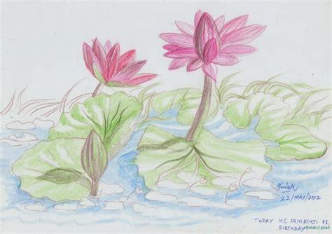 sketsa bunga sakura berwarna gambar kartun  tidak