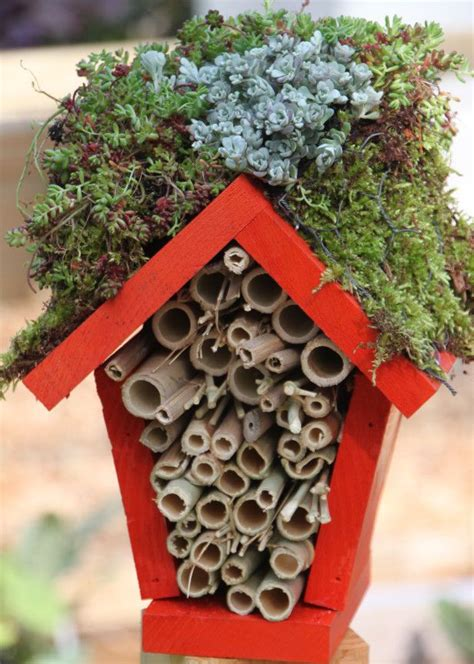 ladybugs in house best 25 ladybug house ideas on pinterest bug houses for kids are bees insects and