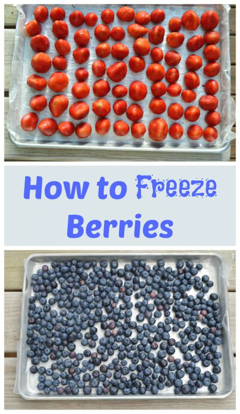 how to freeze berries easy tutorial mom saves money