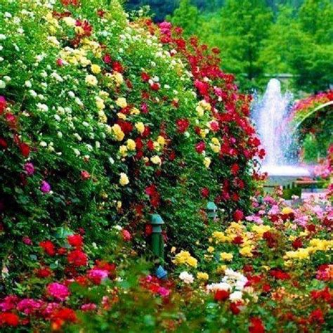 How To Make A Beautiful Flower Garden Rainbow Flower Garden Www Prettyflowers Me Beautiful Flowers Beautiful Butterflies And