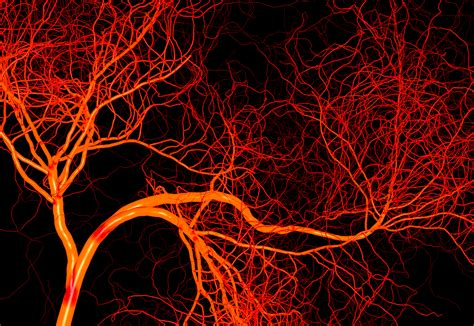 The Of Blood blood vessels the franklin institute