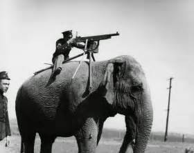 elephant sound machine elephant mounted machine gun 1914