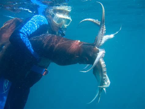 Umpan Squid Jig Udang jumbo squid flash flail in squid
