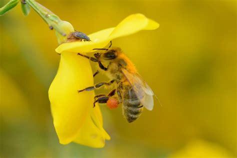 wann ist die nächste em wann ist tag der honigbiene tag der honigbiene ist das