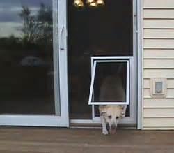 Sliding Screen Door With Pet Door by Pet Screen Door San Diego Services Door For Sliding