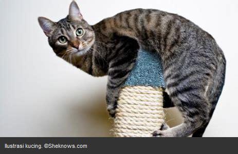So Khusus Kucing tips diet sehat bagi si kucing kucing gue