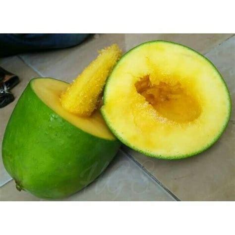 Berapa Harga Bibit Mangga Alpukat tanaman buah mangga alpukat anget anget