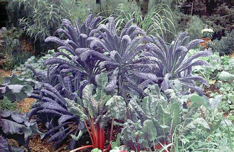 Ornamental Vegetable Garden Top 10 Reasons For Growing Vegetables Veggie Gardening Tips