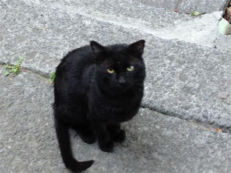 imagenes en negro de gatos junio 2013 caleidoscopio period 237 stico