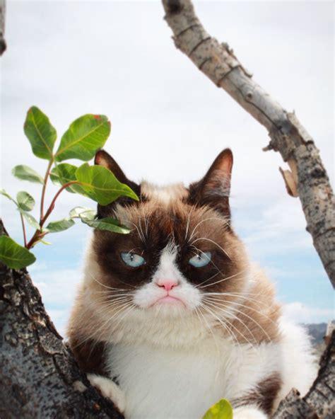 a cat for grumpy cat realgrumpycat