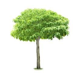 heritage center small tree