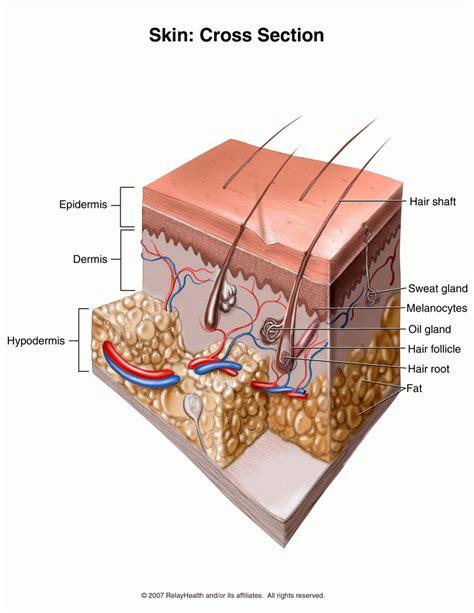 how big is a section carbuncle causes symptoms treatment carbuncle
