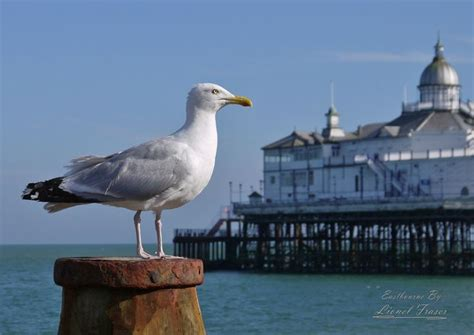 Pier One Dining Room seagull on beach groyne pier lionel fraser pictures of
