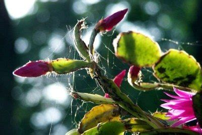 bug resistant cactus plants my cactus has bugs tips on treating cactus insects