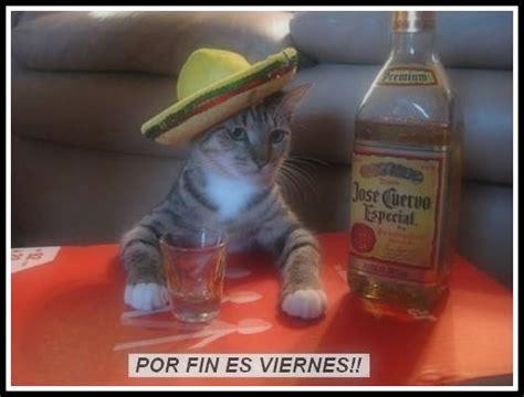 imagenes graciosas de borrachos en la playa imagenes graciosas de animales borrachos imagenes