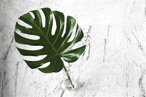 Home Design Decoration by Monstera Deliciosa Decoration