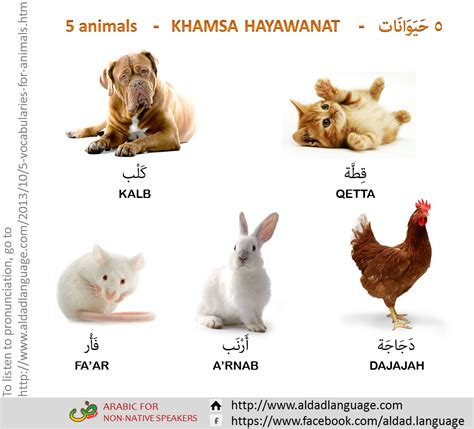 5 Letter Words Animal everyday arabic