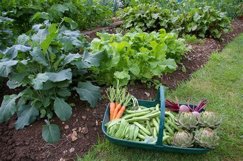 best vegetable gardens fruit trees vegetable gardens sweetpeet best mulch on