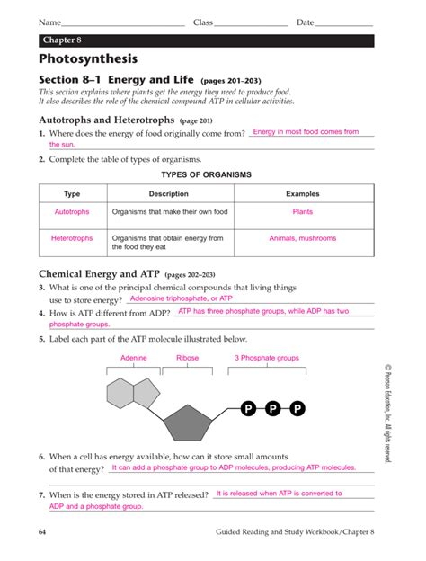 section 8 2 photosynthesis worksheet answers atp worksheet stinksnthings