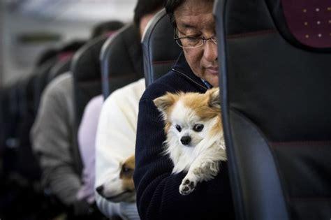 Delta Airlines Emotional Support Animal Letter delta s cracking on emotional support animals on board flights